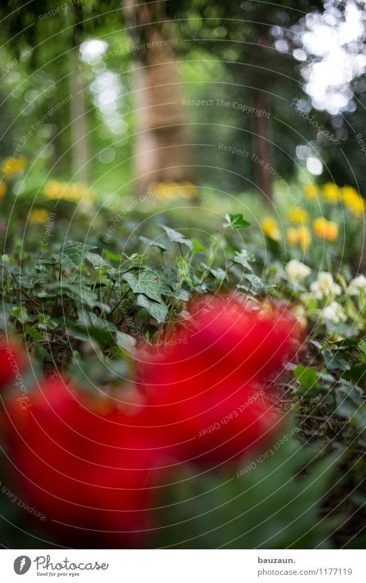 ut köln | stammheim | efeu. Natur Pflanze schön Baum Erholung Blume ruhig Umwelt Frühling Blüte Feste & Feiern Garten Park träumen Zufriedenheit Idylle