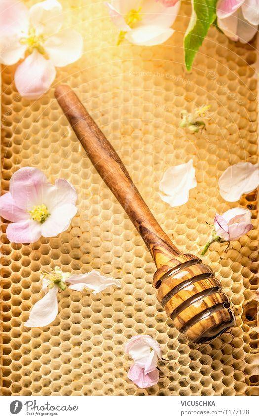Honiglöffel auf Waben mit frischen Blüten Natur schön Sommer Blume Gesunde Ernährung gelb Leben Stil Essen Hintergrundbild Lebensmittel Design Süßwaren