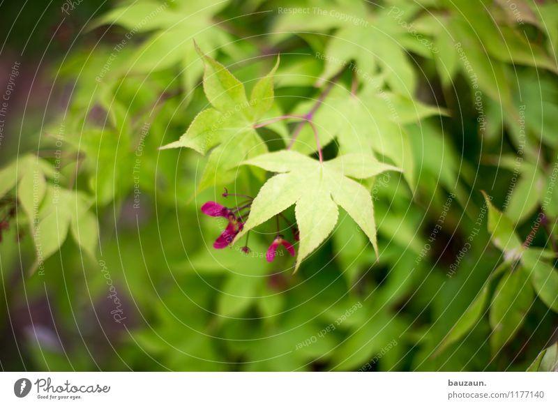 ut köln | stammheim | blätter. harmonisch Wohlgefühl Zufriedenheit Sinnesorgane Erholung ruhig Umwelt Natur Landschaft Pflanze Sommer Baum Sträucher Blatt Blüte