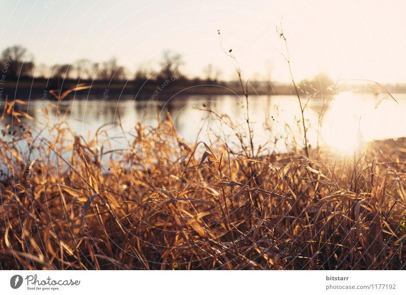Flüssige Sonne Natur Ferien & Urlaub & Reisen Pflanze Sommer Wasser Landschaft ruhig Ferne Umwelt gelb Wärme Wiese Gras See braun