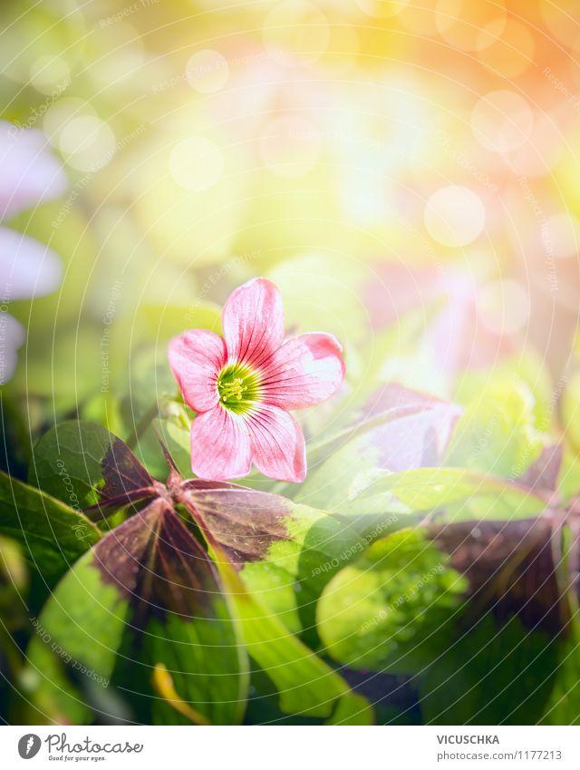 Glücksklee Blume Lifestyle Sommer Garten Dekoration & Verzierung Natur Pflanze Sonne Sonnenfinsternis Sonnenlicht Frühling Herbst Park Wiese Feld gelb grün rosa