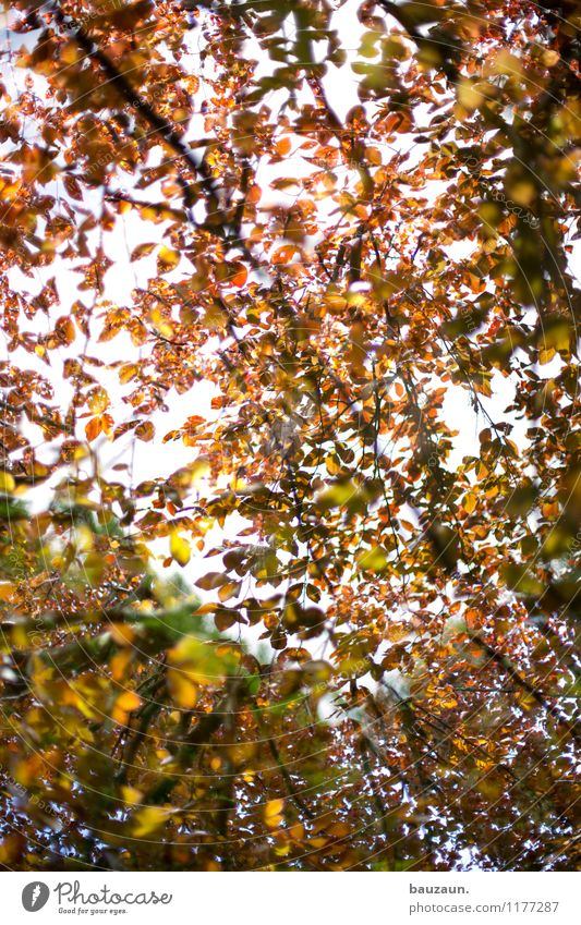 ut köln | stammheim | blätterdach. Himmel Natur Ferien & Urlaub & Reisen Pflanze schön Sommer Sonne Baum Erholung Landschaft Blatt ruhig Umwelt Leben Garten