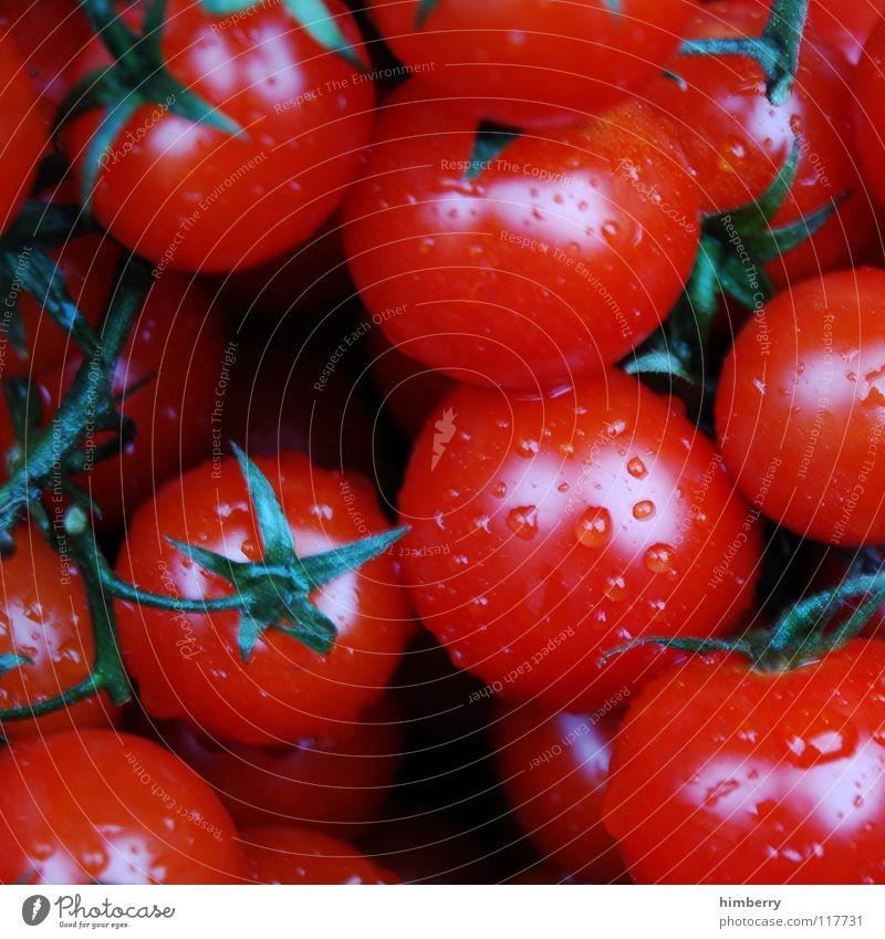 tomatencase Küche kochen & garen Zutaten frisch Landwirtschaft Sommer Gesundheit Pflanze Gemüse Vegetarische Ernährung Makroaufnahme Nahaufnahme Tomate Markt