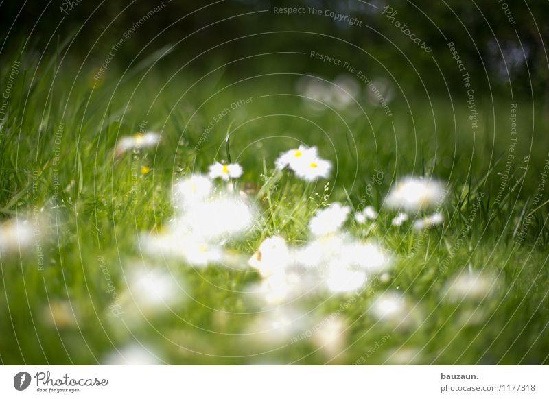 ut köln | stammheim | blumen blumen. harmonisch Wohlgefühl Zufriedenheit Sinnesorgane Erholung ruhig Umwelt Natur Landschaft Erde Schönes Wetter Blume Gras