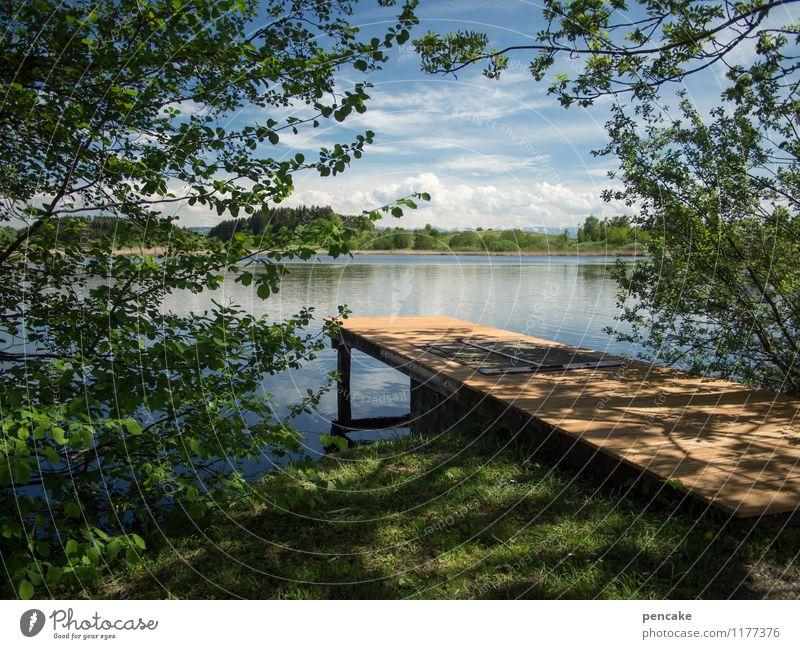 einen sommer lang Natur Landschaft Urelemente Wasser Himmel Sommer Schönes Wetter Baum Gras Wald See Gefühle Stimmung Lebensfreude Freizeit & Hobby Frieden