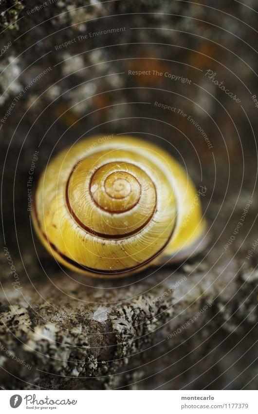 rückzugsort Natur schön Tier kalt Umwelt gelb natürlich grau klein Stein frisch gold authentisch einfach Sauberkeit rund