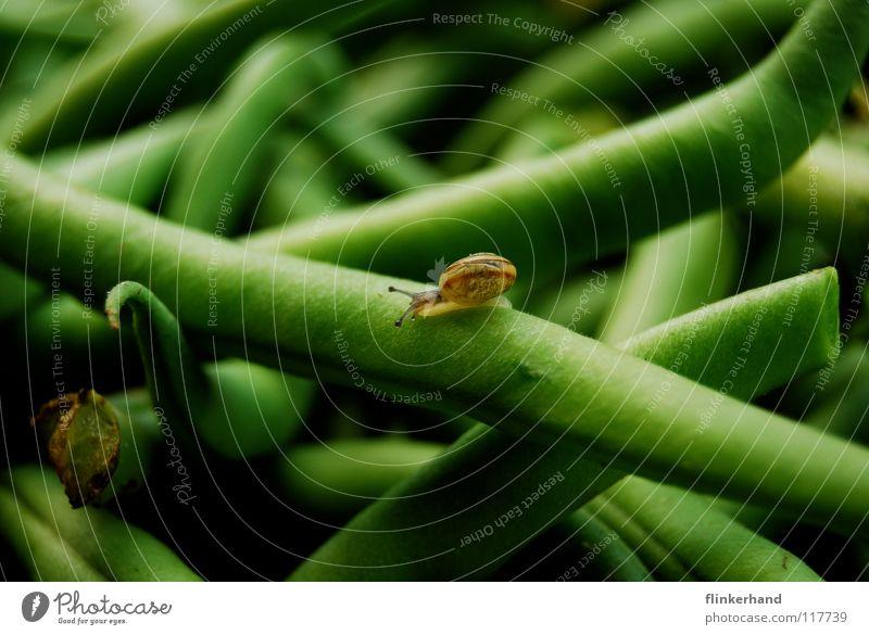 bohnensalat Natur grün Sommer Tier Haus Ferne klein Gesundheit Wohnung nass süß Macht niedlich Gemüse Kräuter & Gewürze Mobilität