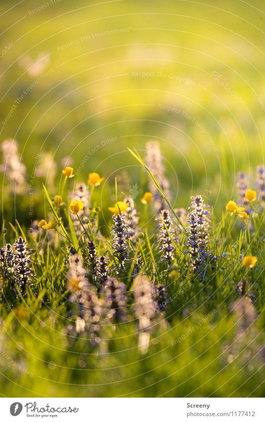 Aufblühen | UT Köln Natur Pflanze Sonnenlicht Frühling Sommer Schönes Wetter Blume Gras Park Wiese Blühend Wachstum frisch klein Wärme ruhig Duft Umwelt