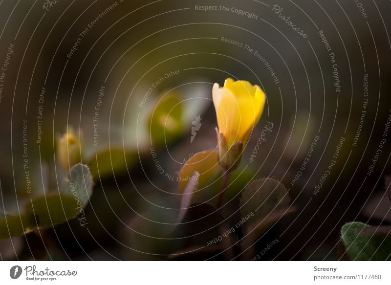 Kleines Gelbes... | UT Köln Natur Pflanze Frühling Sommer Blume Blatt Blüte Park Wiese Blühend Wachstum klein gelb Zärtlichkeiten zerbrechlich Farbfoto