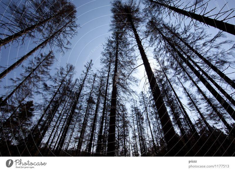Waldsterben Himmel Natur blau Pflanze Sonne Blume Landschaft dunkel schwarz Umwelt Traurigkeit Gefühle Perspektive bedrohlich kaputt