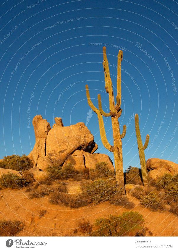 Phoenix Desert Wüste Amerika Kaktus Blauer Himmel Wolkenloser Himmel Gesteinsformationen Klarer Himmel Sonora Wüste
