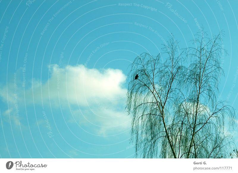du hast ein Vögelchen himmelblau himmlisch zart Geäst filigran Baum Himmel Vogel hast du :-) lustiger vogel Ast