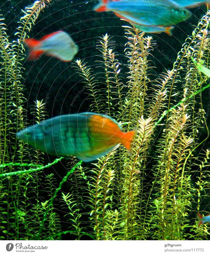 fischers fritzens prachtexemplare blau Wasser Meer Tier dunkel See Lampe orange Zusammensein Schwimmen & Baden Glas nass Fisch tauchen fangen Angeln