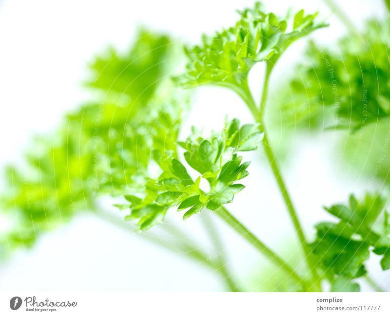 Peter's Freund Petersilie Küche Kräuter & Gewürze grün Grünpflanze Kaugummi kochen & garen Zutaten Gesundheit Gastronomie dunkelgrün hellgrün Blattadern Gefäße