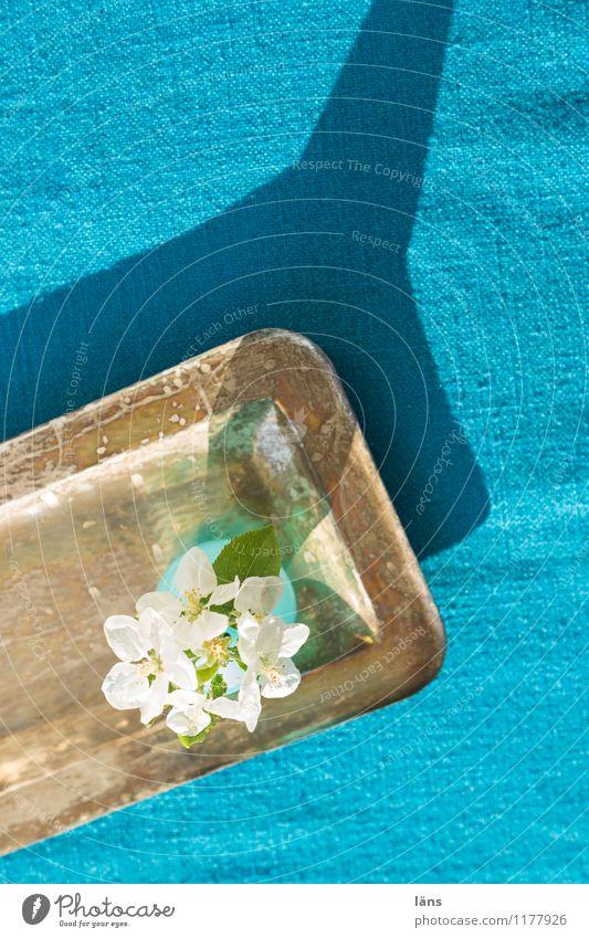 Tablett Tisch Tischdecke Blumen Schatten Licht