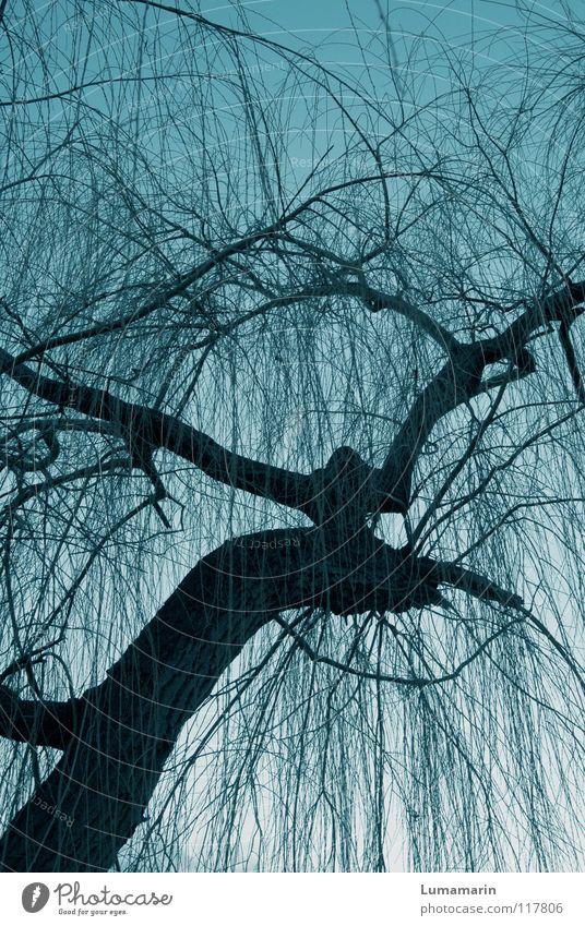 Etwas Baum Baumstamm verzweigt Geäst Winter kalt dunkel Dämmerung unheimlich bedrohlich Leben Eigenleben seltsam geheimnisvoll träumen Märchen fantastisch