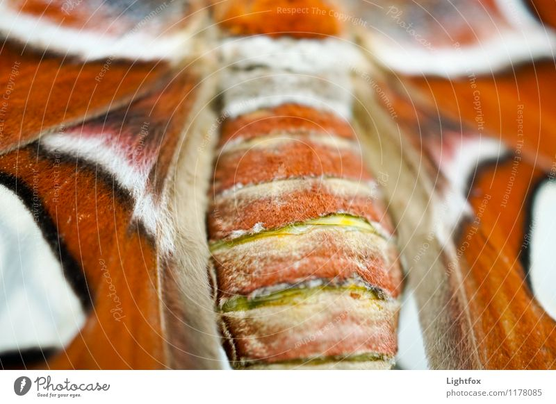 Alter Falter Tier ästhetisch Flügel Tragfläche Fell Schmetterling Schuppen
