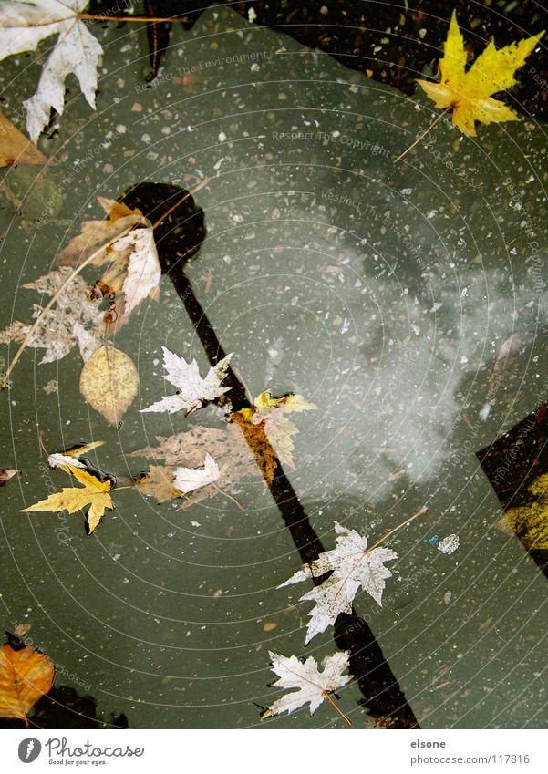 ::SCHLUSS MIT HERBST:: Herbst Blatt Reflexion & Spiegelung Beton Laterne Licht Winter kalt nass ungemütlich mehrfarbig Sturm Pfütze Haus Gebäude laublos Wohnung