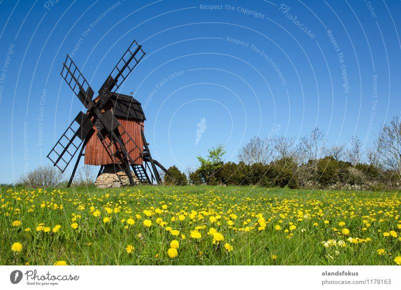 Alter Windmühlen- und Blütenlöwenzahn Himmel Natur Ferien & Urlaub & Reisen alt blau grün Farbe Blume rot Landschaft gelb Architektur Gras Tourismus retro