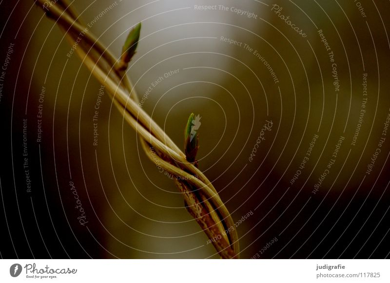 Verdreht Natur grün Pflanze Farbe Blatt Umwelt Linie braun Wildtier Wachstum Sträucher zart drehen Zweig fein kreuzen