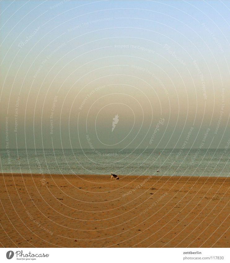 Bansin, Seeseite Meer Karibisches Meer Strand Hund Dalmatiner Sonnenuntergang Horizont Ferne träumen Sehnsucht Ferien & Urlaub & Reisen Nebensaison Küste Winter