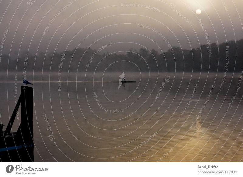 Morgens Wasser Himmel Baum Wolken Wald kalt Herbst grau See Vogel Wellen Nebel Horizont frisch Kanu Glätte