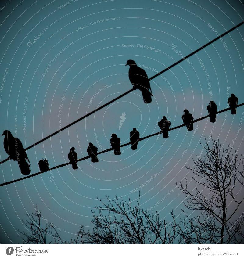 Neunundzwanzig Himmel Herbst Vogel Draht Leitung rechnen Stab zählen schieben Abakus