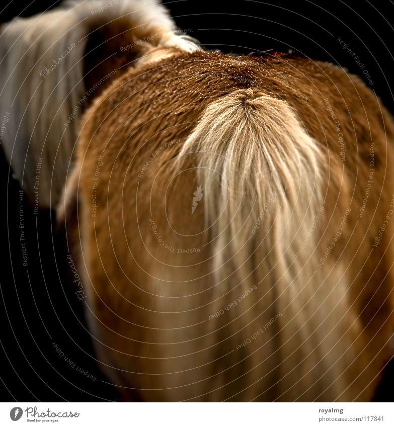 ponyhof Pferd Fell Schwanz Mähne braun schwarz dunkel Säugetier Hinterteil ponny hell