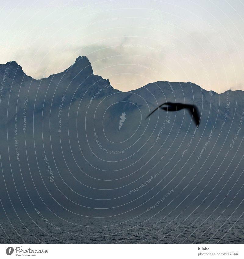 Elements III Himmel Wasser Einsamkeit Winter dunkel Berge u. Gebirge kalt Leben grau See Stein Vogel Erde Felsen Wetter Nebel