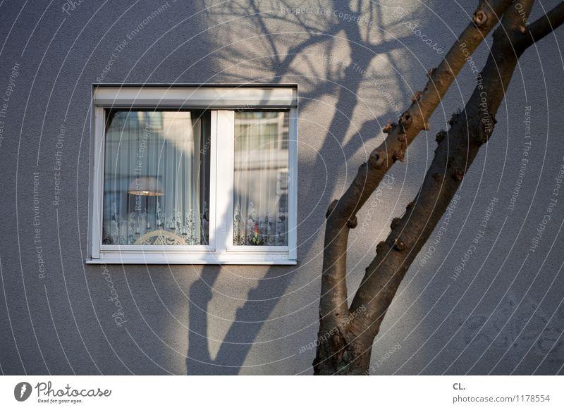 lichtspiele Häusliches Leben Wohnung Haus Dekoration & Verzierung Lampe Gardine Schönes Wetter Baum Mauer Wand Fenster Kerze Farbfoto Außenaufnahme Menschenleer