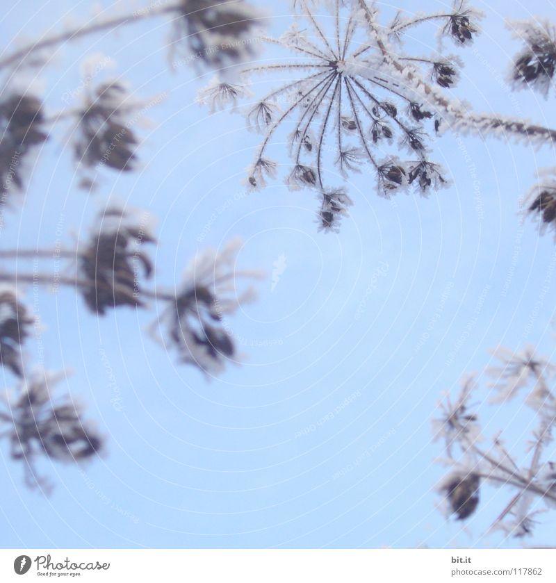 TIEFKÜHL schön Winter Schnee Himmel Eis Frost Blume träumen fantastisch kalt blau Surrealismus Eiskristall gefroren Märchenlandschaft Stern (Symbol)