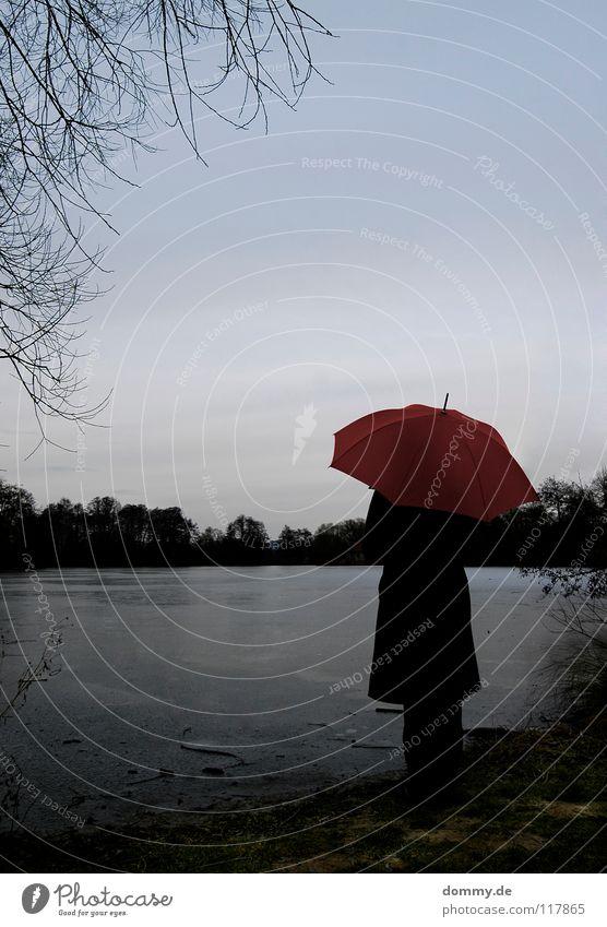 la solitaria Frau Hand schön Baum grün rot Winter Blatt Wolken dunkel kalt Herbst oben Holz See Eis