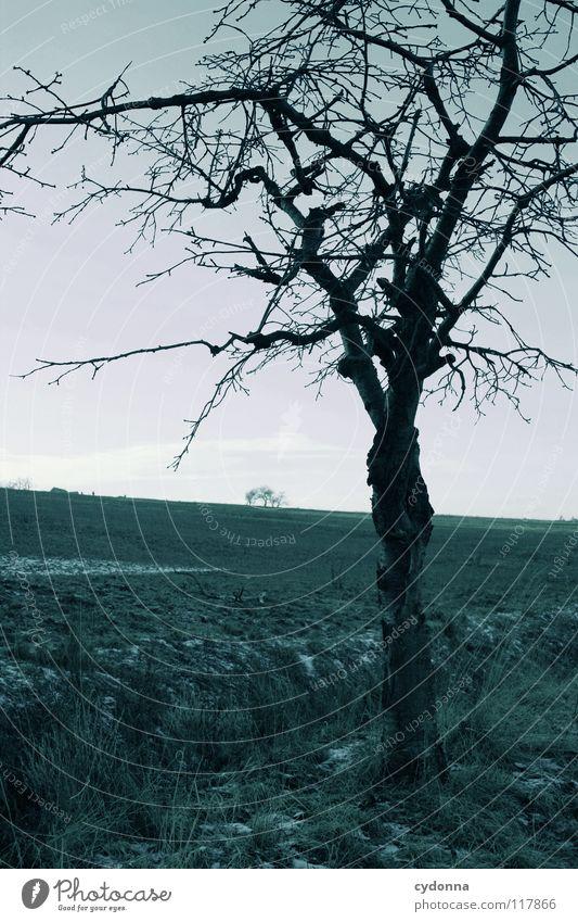 ABWARTEN Winter kalt Einsamkeit ruhig Feld gefroren Stimmung Sehnsucht Erscheinung Baum bewegungslos dunkel ungemütlich Horizont einzeln Silhouette schwarz