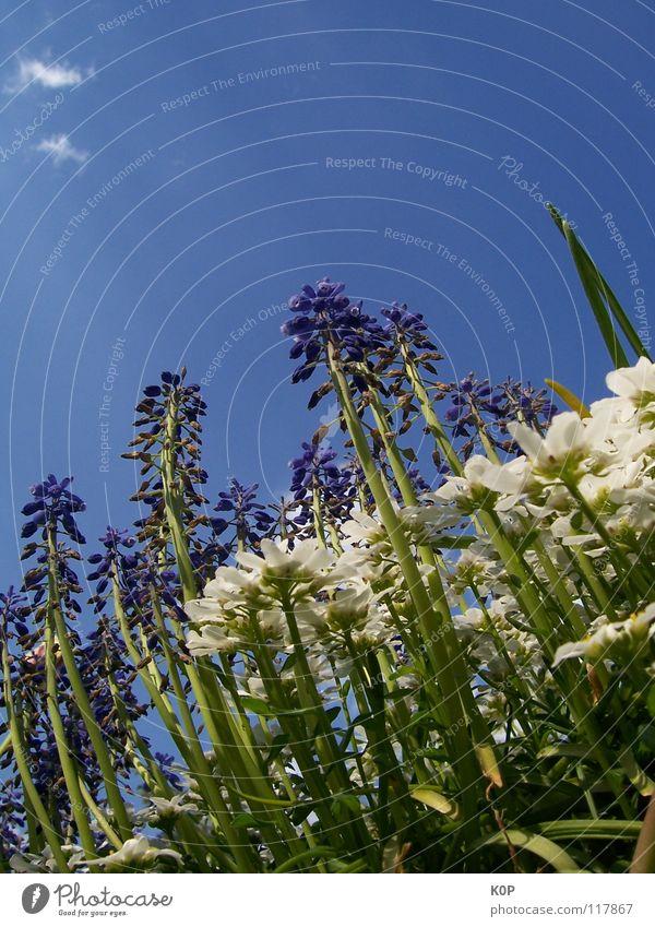 vom Bordstein bis zur Blütenspitze zurück Natur Blume Pflanze Frühling hoch aufstrebend