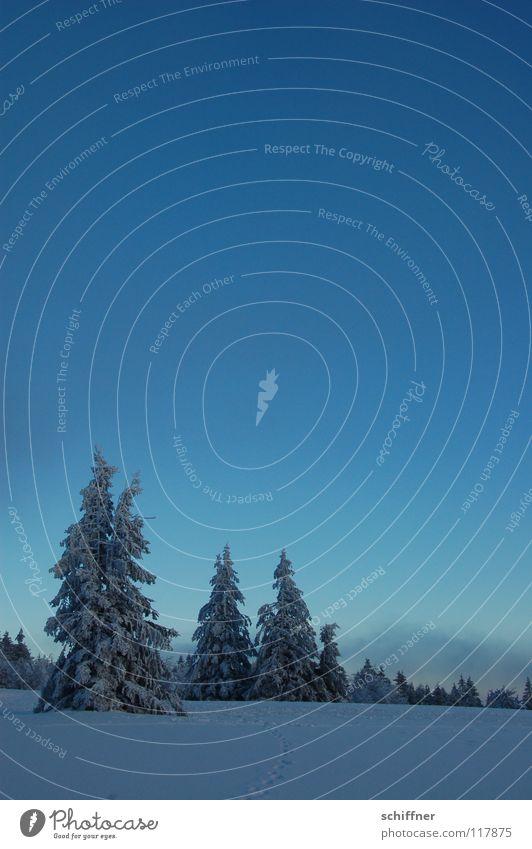 Ä Tännchen I Himmel Winter Wolken Ferne kalt Schnee Berge u. Gebirge Freiheit Eis Nebel Niveau Unendlichkeit Idylle Tanne Gipfel Schneelandschaft