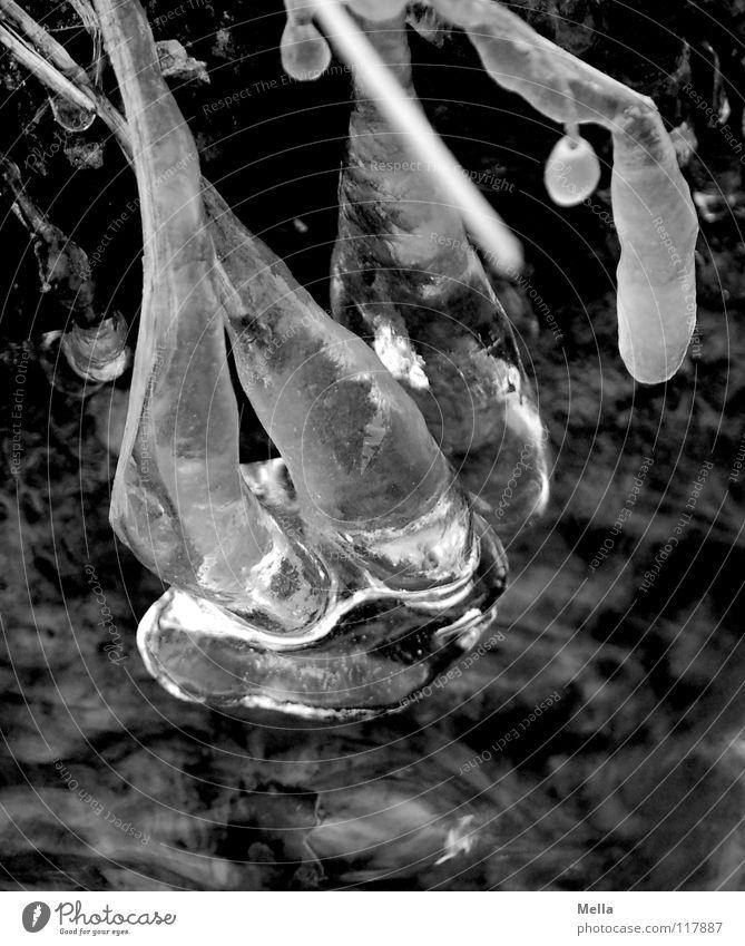 Eis nass fließen kalt Winter bizarr hängen Eiszapfen Bach durchsichtig Klarheit Strukturen & Formen schwarz weiß Wasser Fluss geforen Frost Wassertropfen Natur