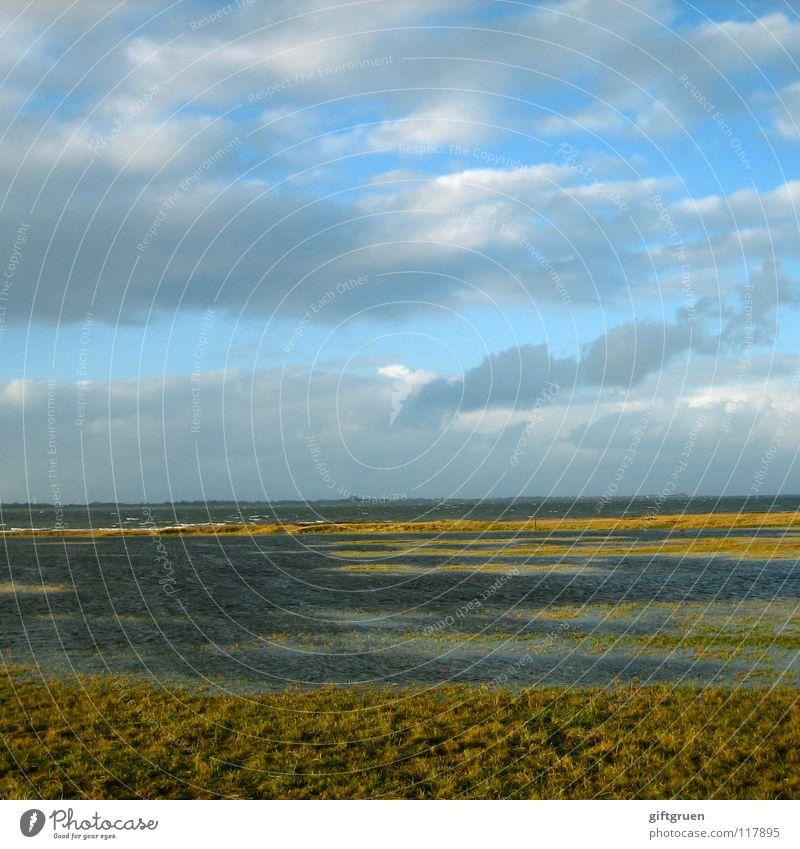 nordsee, windstärke 10 bft. Natur Wasser Himmel Sonne Meer Strand Ferien & Urlaub & Reisen Wolken Herbst Wiese Gras Landschaft Küste Wind Sturm Leidenschaft