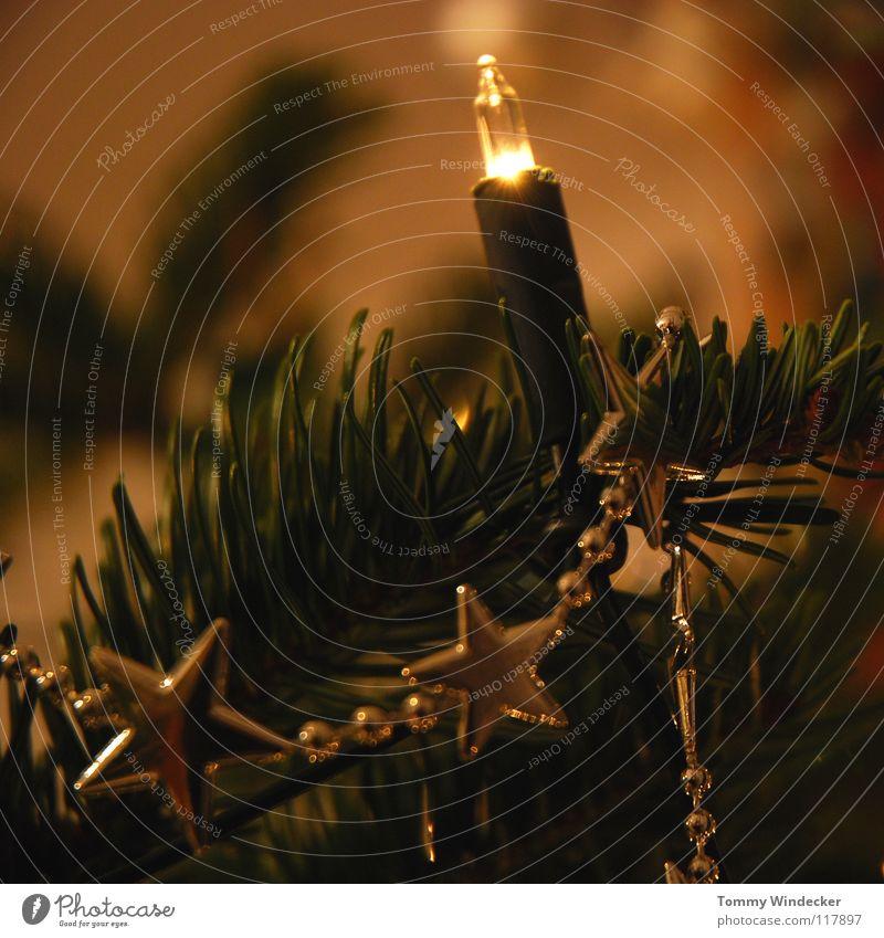 Alle Jahre wieder Weihnachten & Advent Freude Winter Beleuchtung Feste & Feiern glänzend Dekoration & Verzierung süß Stern (Symbol) Kerze Frieden Überraschung Weihnachtsbaum Kugel Schmuck Tanne