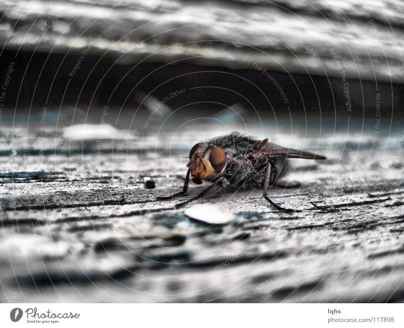 Dirty fly trashig Mikrofon Schiffsbug Zoomeffekt