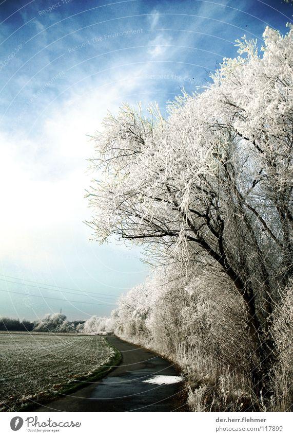 arktis aufm fahrradweg Himmel Baum Wolken kalt Schnee Wege & Pfade Eis Feld Nebel Beton Sträucher Asphalt gefroren Raureif Speyer