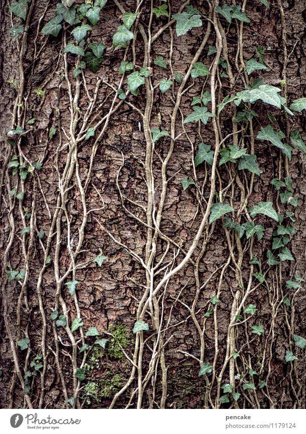 verschlungene pfade Natur Pflanze grün Baum Wald Leben Frühling Paar Erfolg Zeichen Urelemente Baumstamm festhalten Zusammenhalt Kontakt Baumrinde