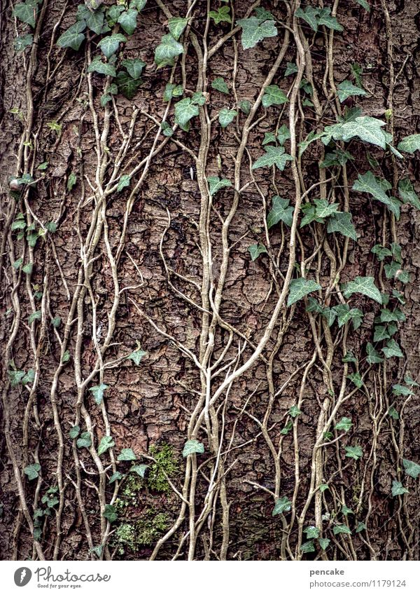 verschlungene pfade Natur Urelemente Frühling Pflanze Baum Wald Zeichen Erfolg grün Paar Kontakt Leben Zusammenhalt Efeu Baumrinde Baumstamm festhalten Ranke