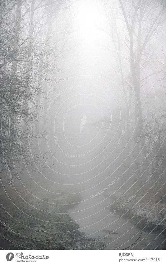 foggy woods #1 Natur Wasser Baum Winter Einsamkeit Wald dunkel kalt Traurigkeit Nebel nass Frost Fluss gefroren feucht