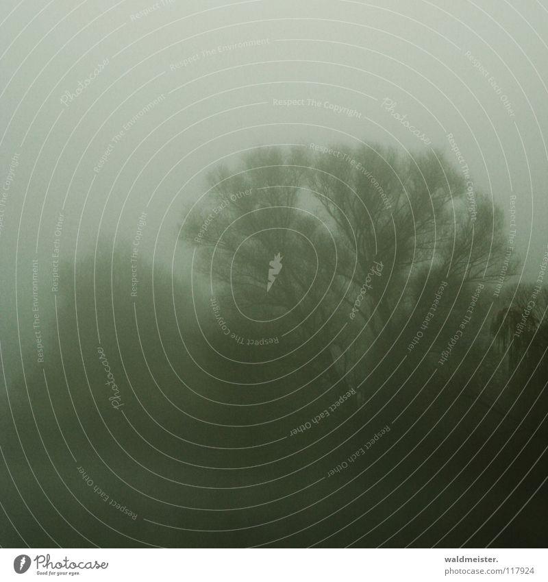 Bäume im Nebel Baum Wolken Wald kalt Herbst Traurigkeit Romantik Morgennebel