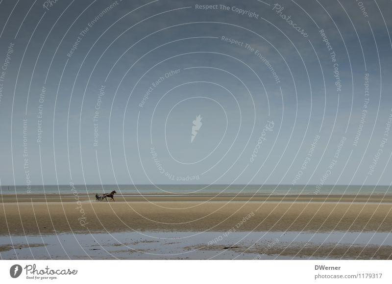 Strand Freude Freizeit & Hobby Reiten Abenteuer Reitsport Rennbahn Mensch Umwelt Natur Sand Wasser Wetter Küste Nordsee Pferd laufen Tierliebe Pferderennen