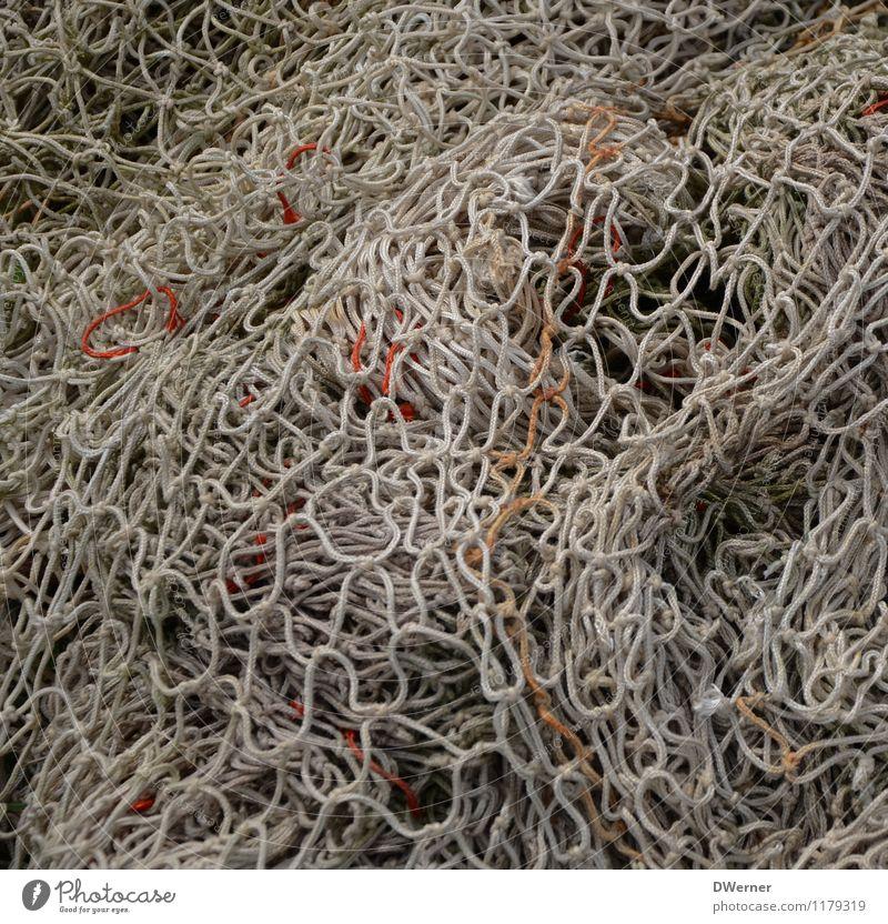 Netzwerken Angeln Hafen Fisch fangen Jagd tauchen dreckig nachhaltig weiß Erfolg Menschlichkeit fleißig Tod Appetit & Hunger Gier Natur Kraft