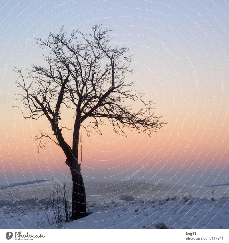 abendstimmung Winter weiß Baum Baumstamm Geäst Baumkrone kalt Erzgebirge Parkplatz Feld rosa Sonnenuntergang Romantik Sehnsucht Schnee Ende Graffiti Freude