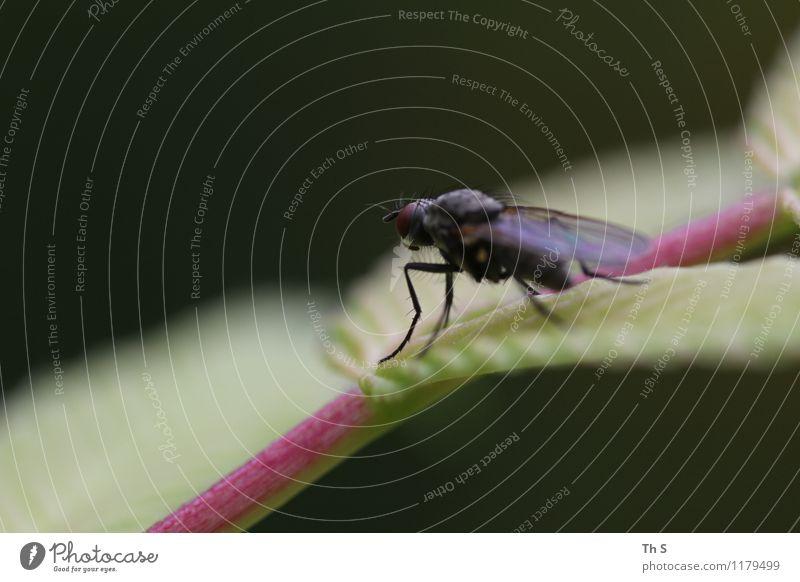 Fliege Natur Pflanze schön Sommer ruhig Tier Frühling natürlich Zufriedenheit elegant authentisch ästhetisch einfach einzigartig Gelassenheit