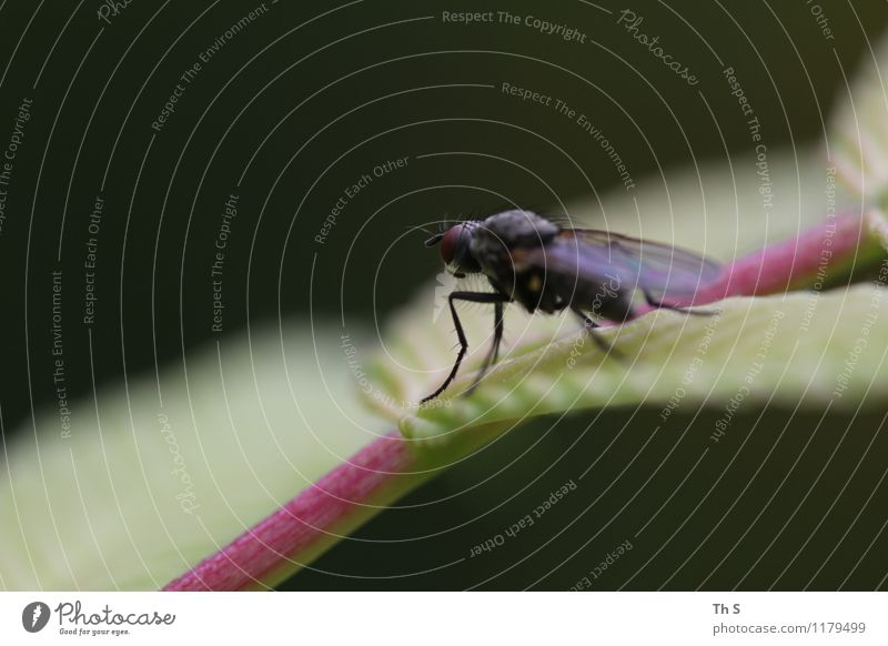 Fliege Natur Pflanze Tier Frühling Sommer 1 ästhetisch authentisch einfach elegant natürlich Zufriedenheit Gelassenheit geduldig ruhig einzigartig harmonisch