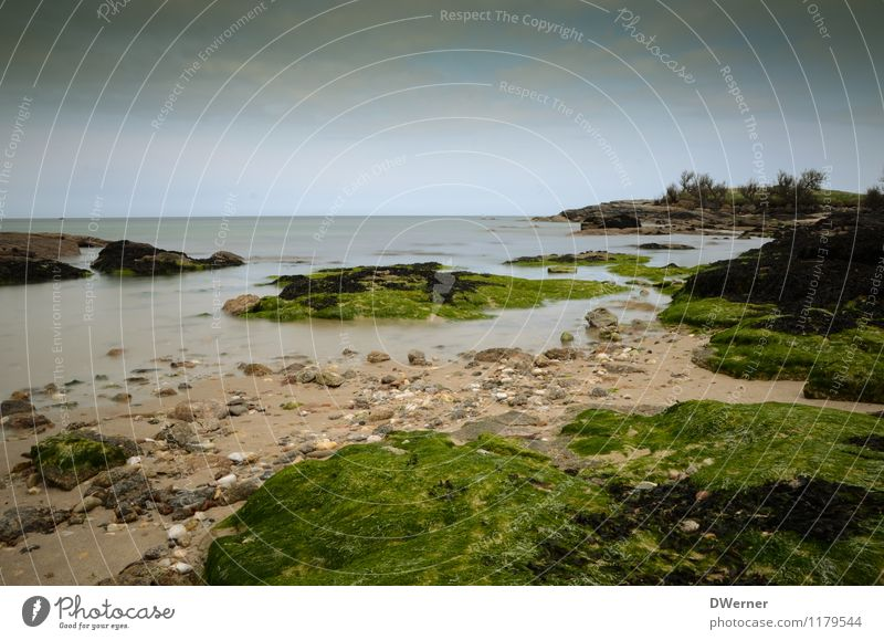 noch mehr Normandie Ausflug Abenteuer Strand Meer Umwelt Natur Landschaft Pflanze Urelemente Sand Wasser Himmel Schönes Wetter Sträucher Moos Küste Bucht Fjord